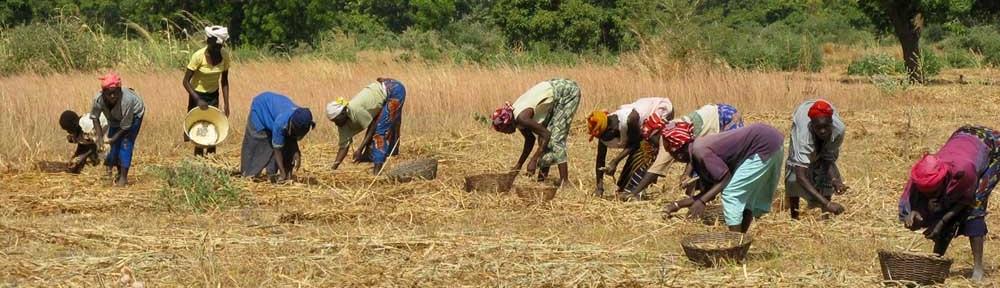 Trabajar por la seguridad alimentaria. Una experiencia compartida con la asociación burkinesa APFG